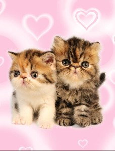 KittenHearts