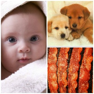 Social networking w/babies, puppies and bacon